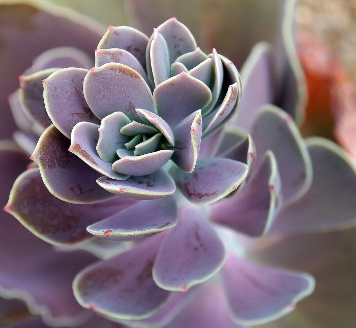 grow happy and healthy succulents with this essential guide