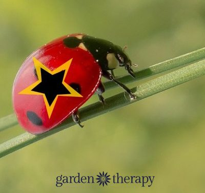 The Beneficial Insect Super 7: Important Natural Enemies on Patrol in Your Garden