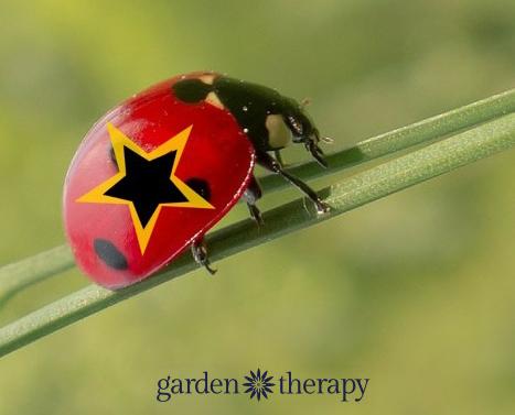 Ladybug Super