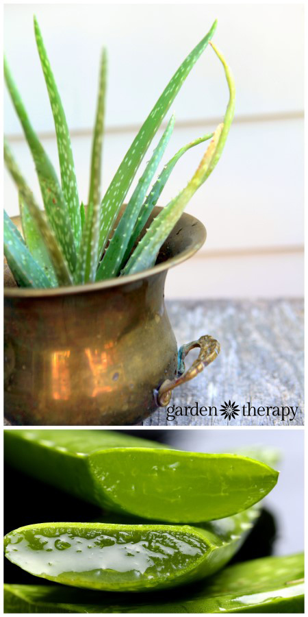 Aloe Vera as an all natural sunburn remedy