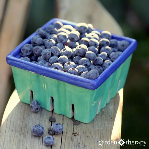 Fresh Blueberries in a handpainted ceramic berry basket