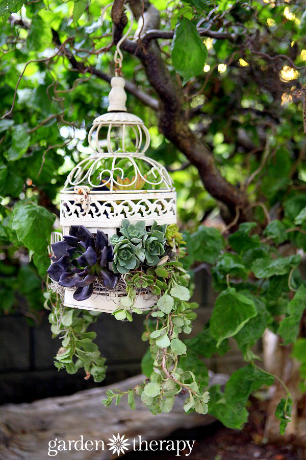 a pretty vintage birdcage repurposed as a planter for succulents