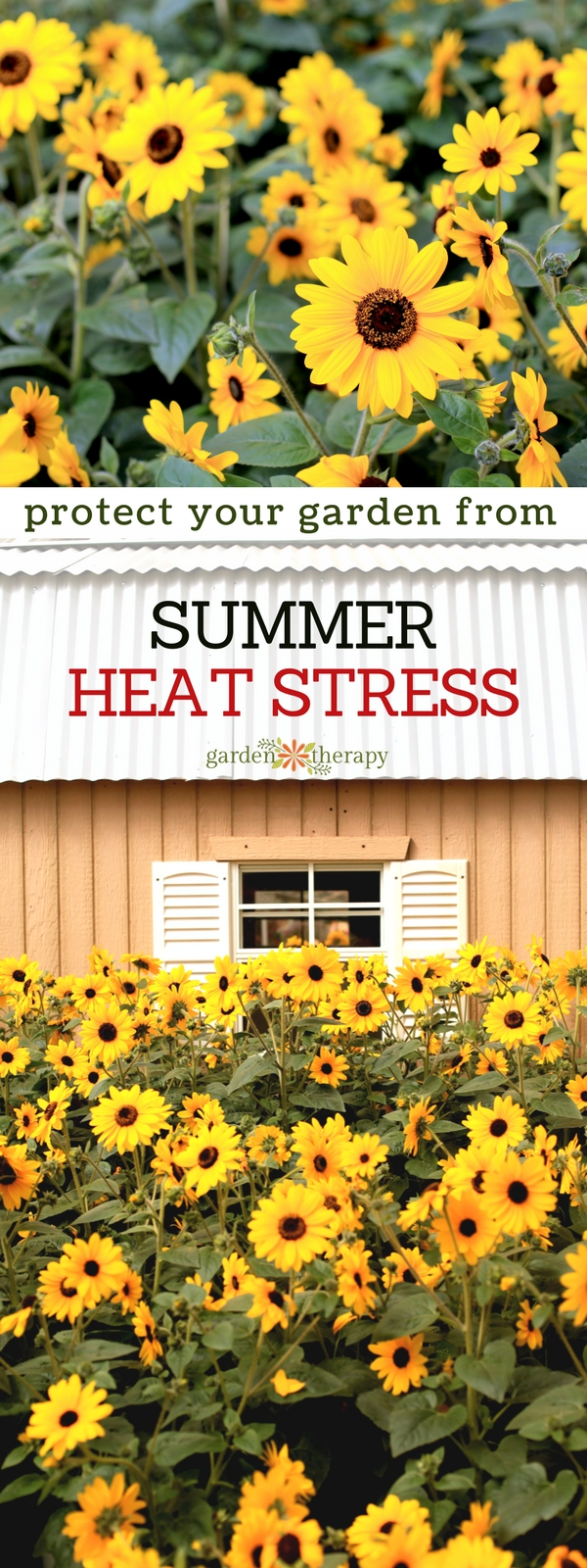 How to Protect Your Summer Garden from Heat Stress