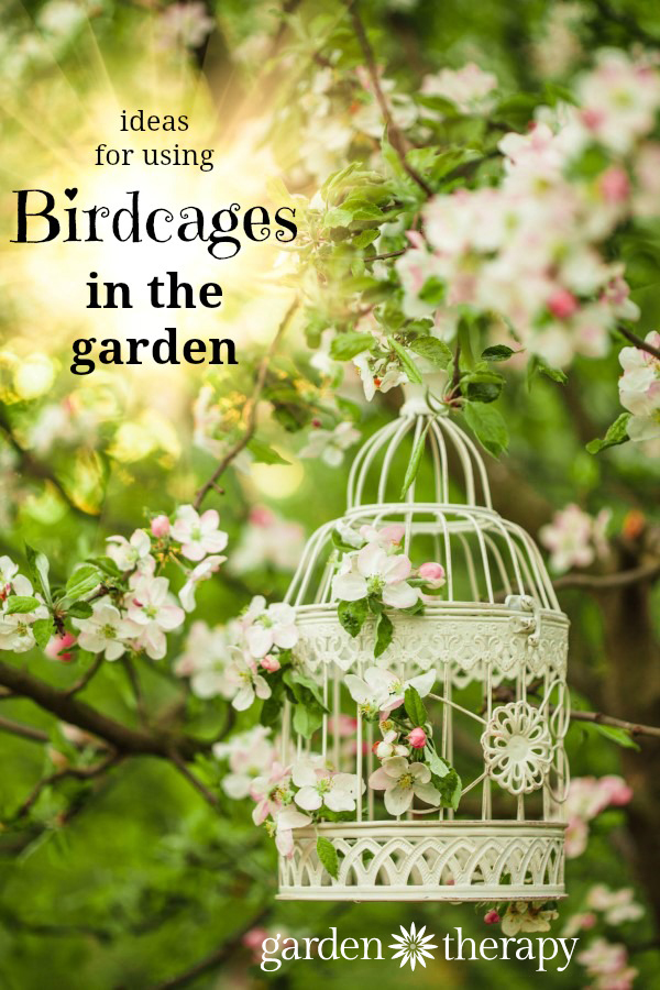 How to use birdcages in the garden