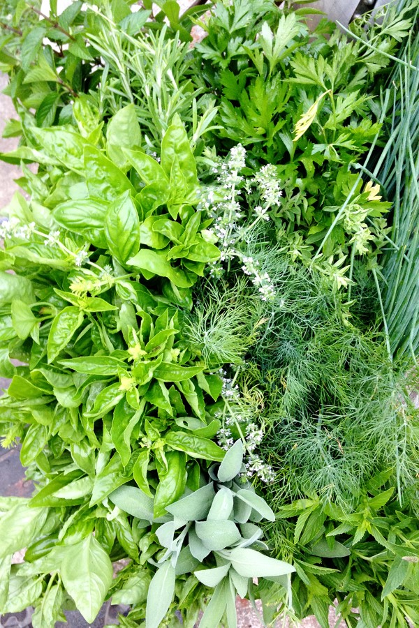 Mixed Herbs as salad greens