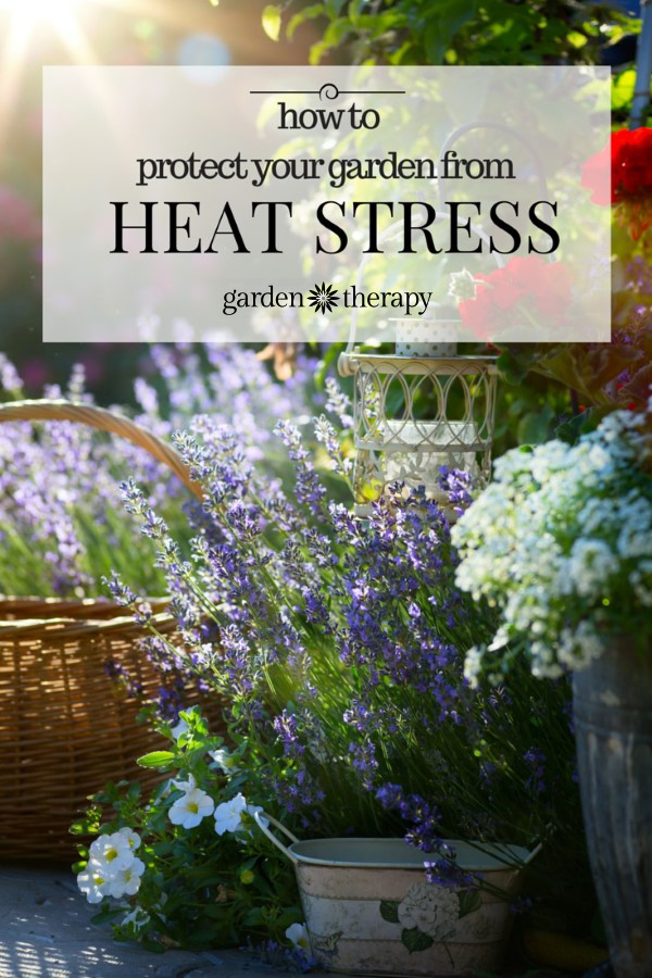 Protect you garden and yourself from over heating in the garden this summer with these tips
