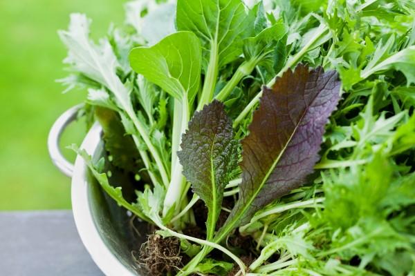 homegrown salad greens