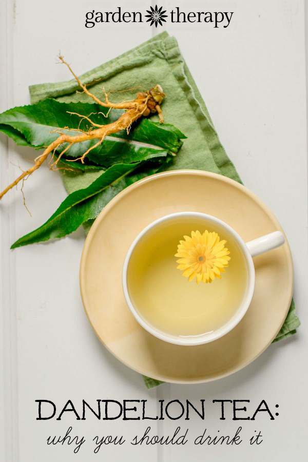 Stop weeding and start drinking - dandelions are a superfood and you should be drinking this tea!