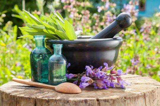 top 5 medicinal herbs sage