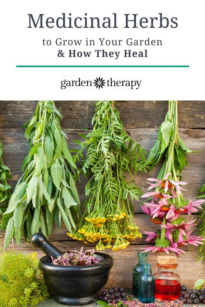 The top medicinal herbs that everyone should grow in thier home garden