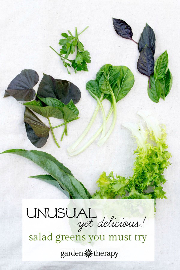 Unusual yet delicious salad greens you must try
