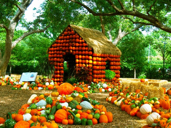 Dallas Arboretum Pumpkin Village Tour