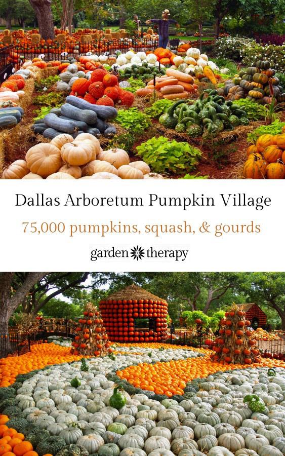 Dallas Arboretum Pumpkin Village 2015
