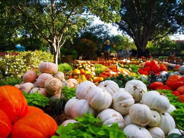 Dallas Arboretum Pumpkin Village 2015 Tour in Photos