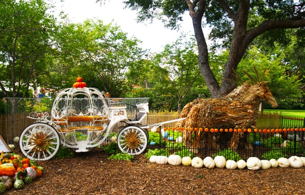 Dallas Arboretum Pumpkin Village Tour