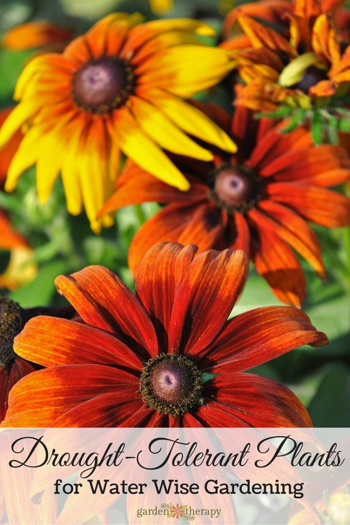 Drought-tolerant plants to conserve water and provide an essential food source for pollinators