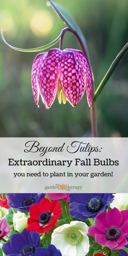 Beyond Tulips: Extraordinary Fall Bulbs You Need to Grow!