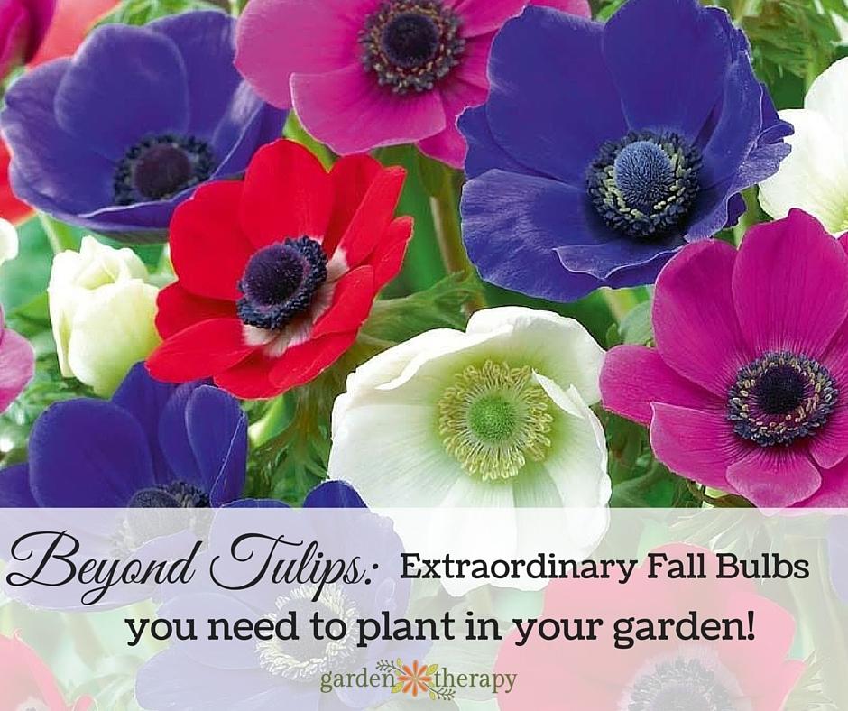 Fall Bulbs Guide