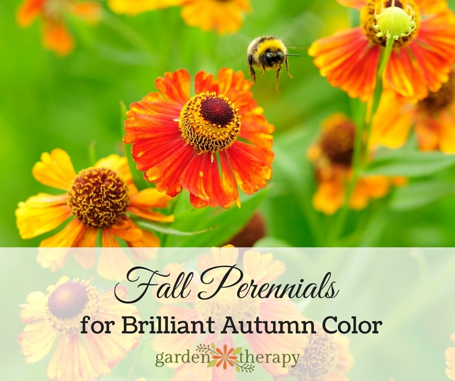 Gorgeous Color From Autumn Perennials