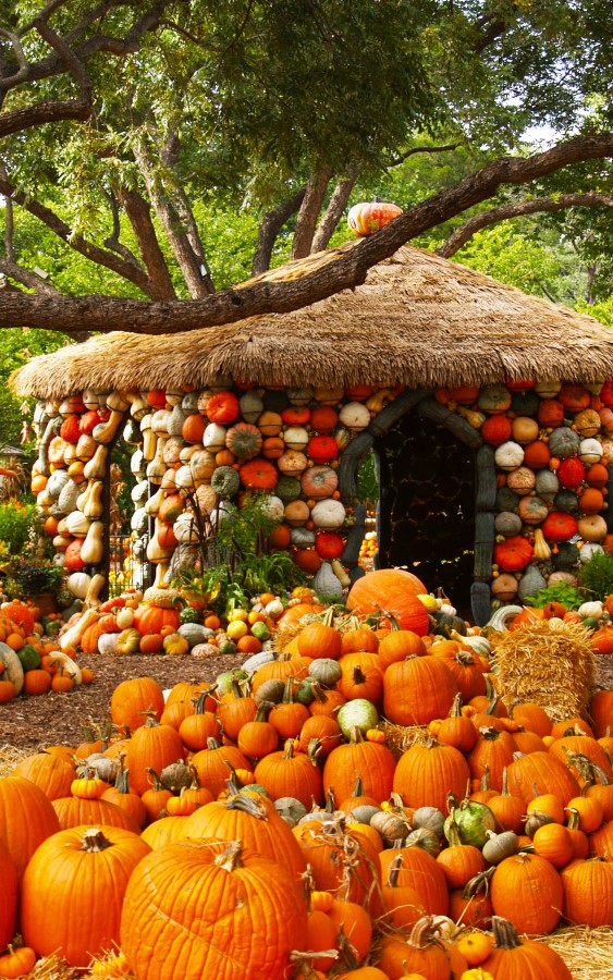 Now that's festive pumpkin decorating - Pumkin House