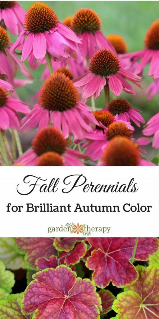 Perennials to grow in the fall for brilliant color