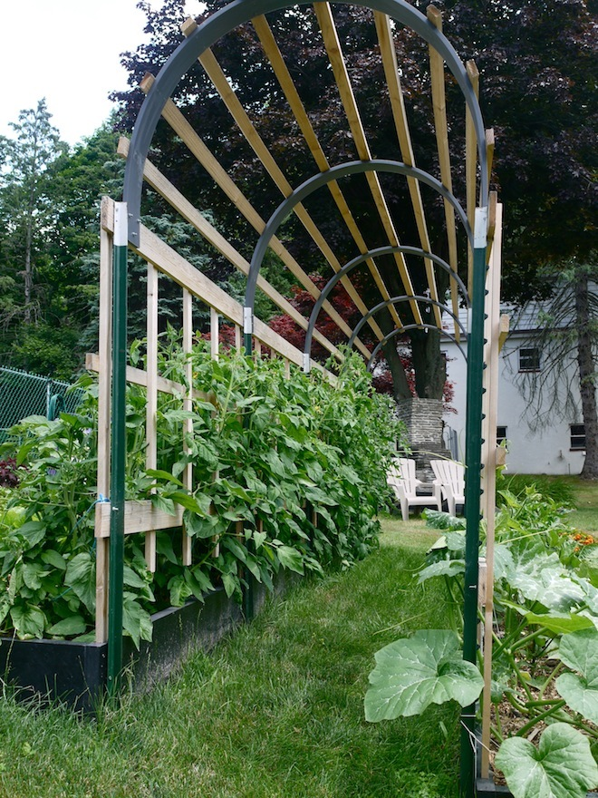 Susan of Learning and Yearning made the most attractive tomato trellis that I have ever seen!