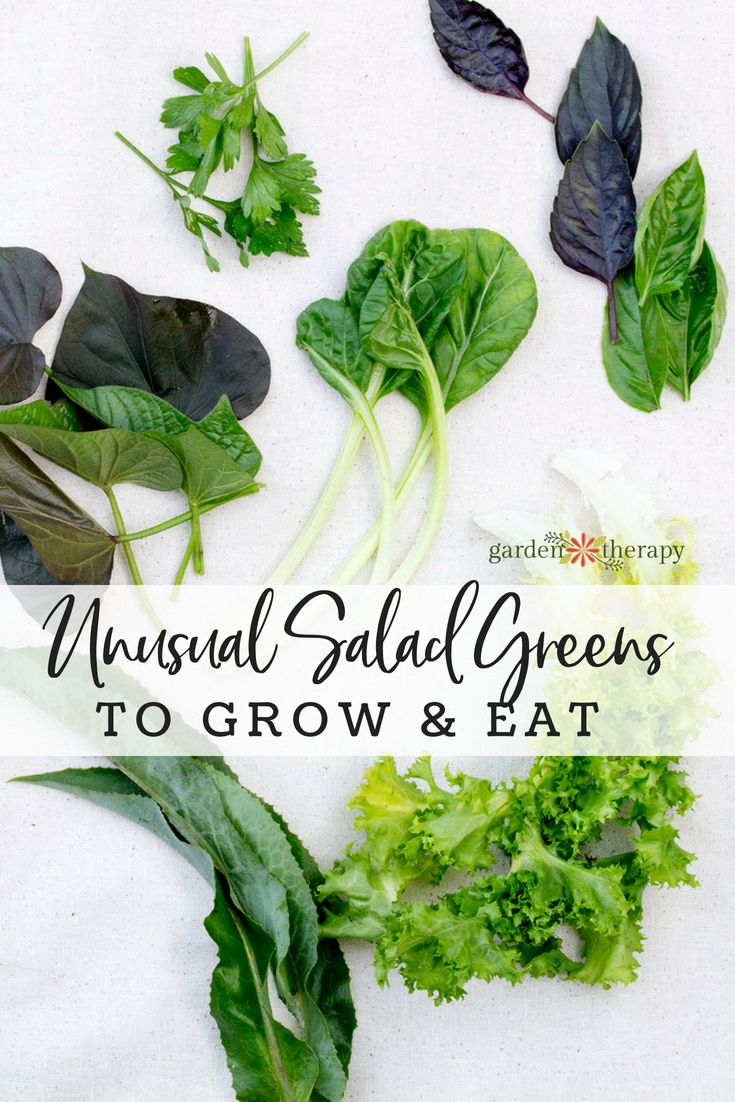 unusual salad greens to grow and eat