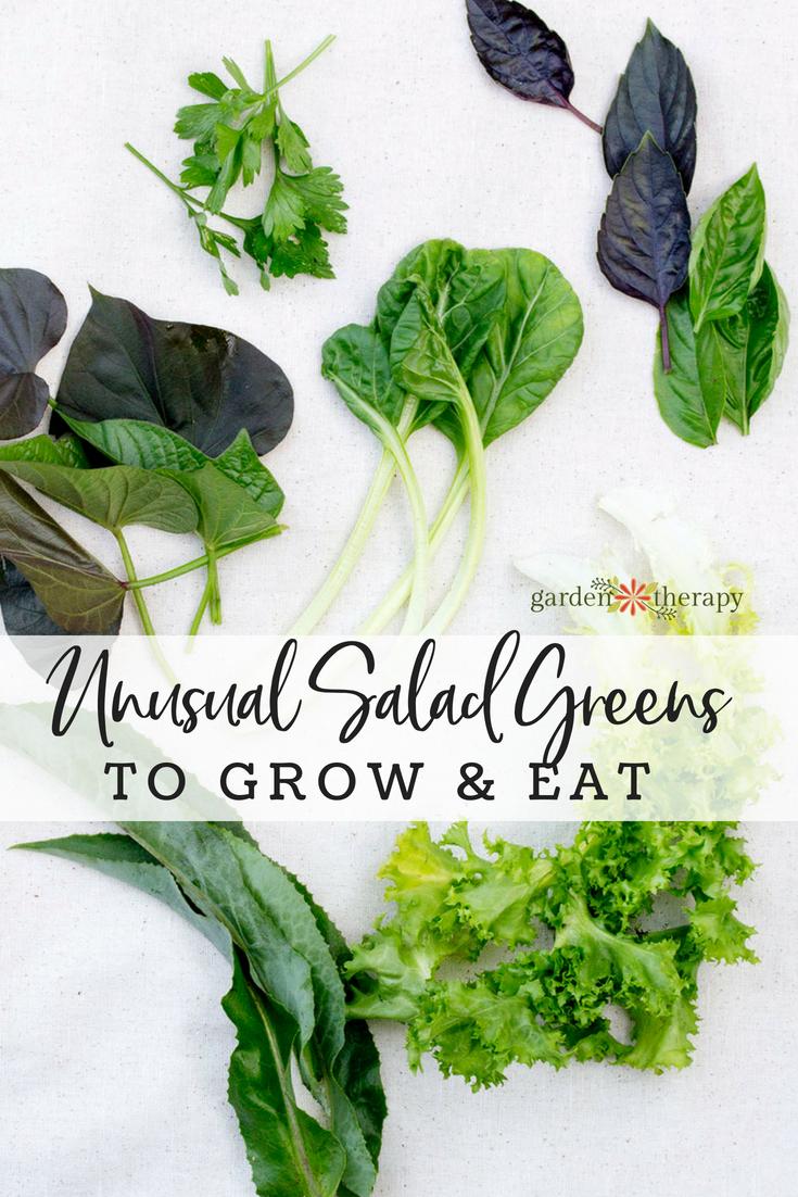 Unusual Salad Greens That Aren T Lettuce