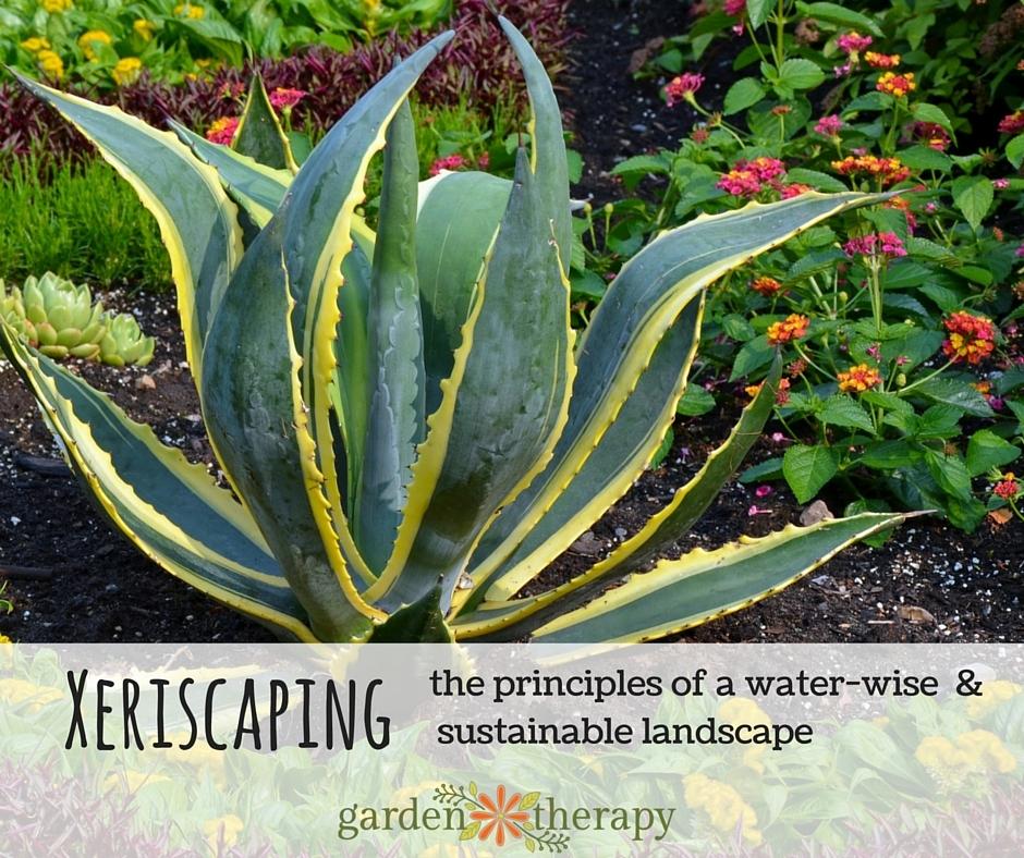 Xeriscaping Garden Design