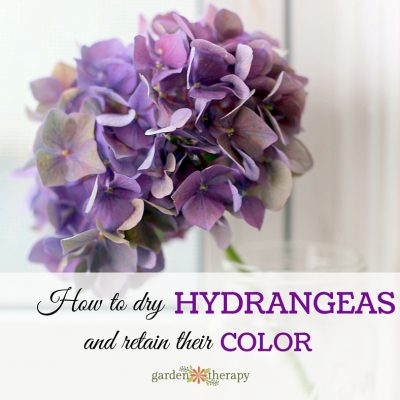 The Simple Way to Dry Hydrangea Flowers and Keep Their Color
