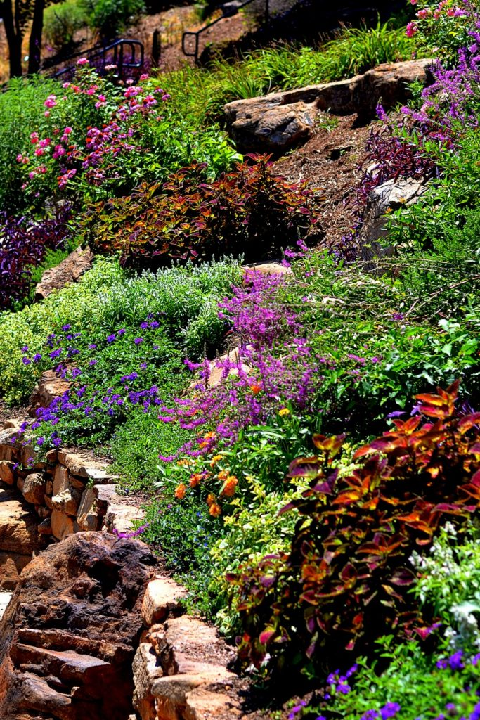 Xeriscaping gardening for water conservation for Garden design principles