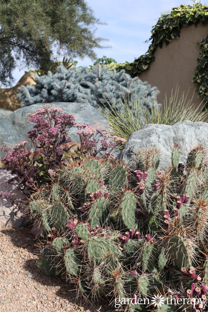 Cactus and Sedum