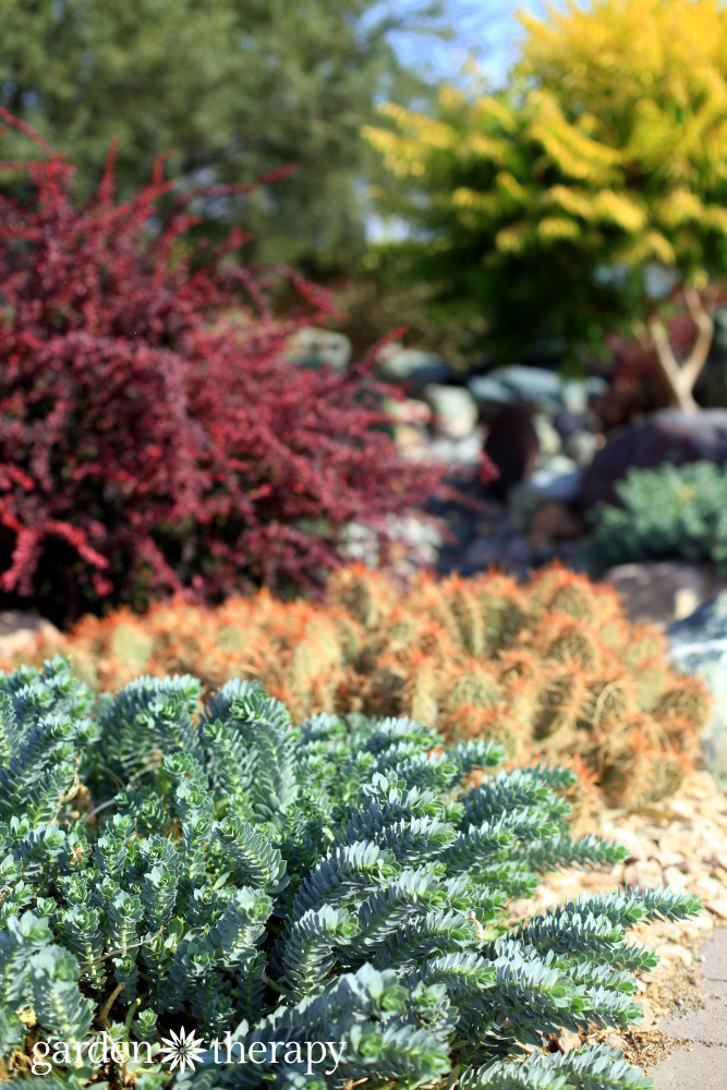 Landscaping for drought inspiring gardens that save water for Drought tolerant landscape design