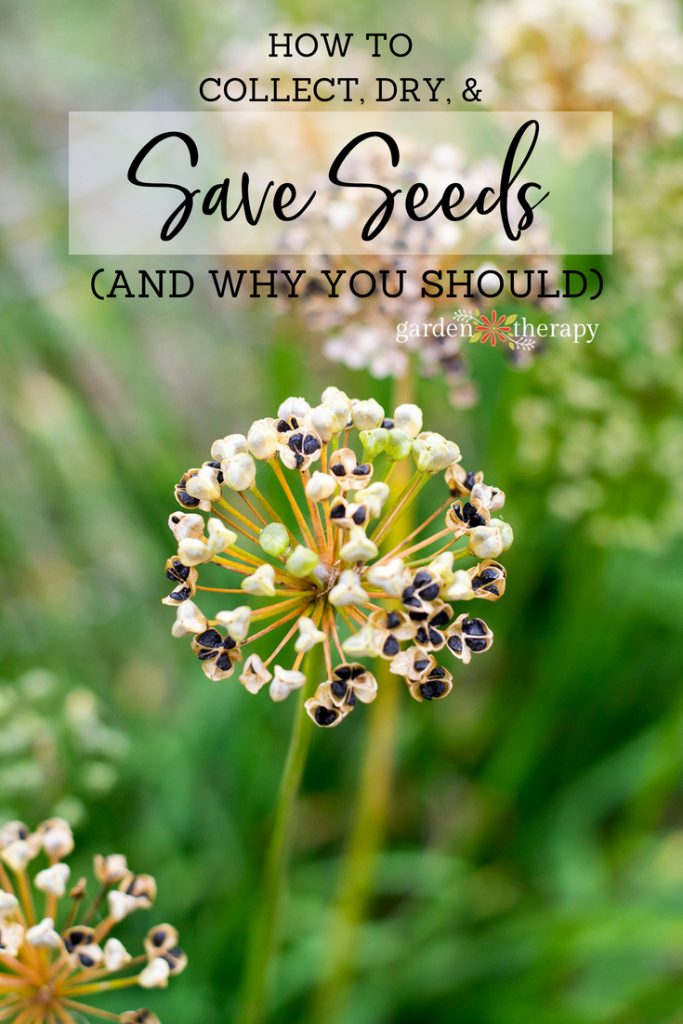 how and why to save seeds from the garden