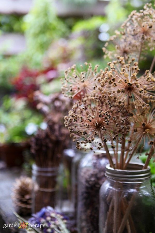 dried allium seed heads in a Mason jar vase