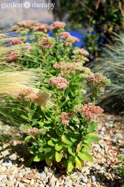 Landscaping for Drought: Inspiring Gardens That Save Water
