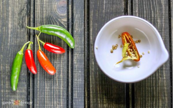 saving pepper seeds