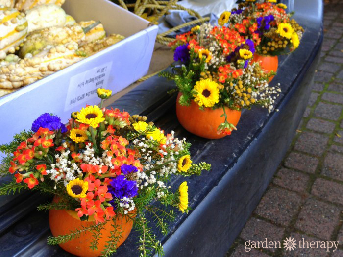 Tailgating Fall Style with planted pumpkins at the farmers market