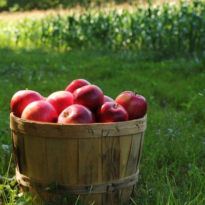 The Complete Fall Garden Checklist