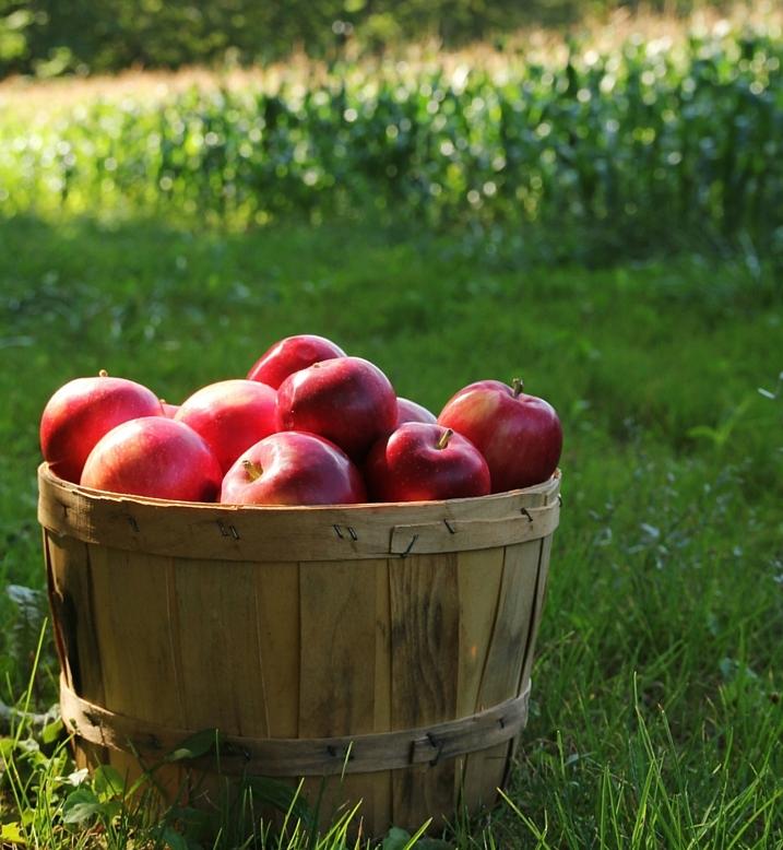 The Complete Checklist For Garden Tasks In Fall Apple Basket
