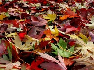 Fall Garden Care: The Easy Way to Clean Up Leaves