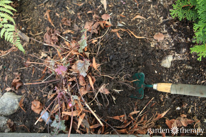 This is why you should be dividing perennials