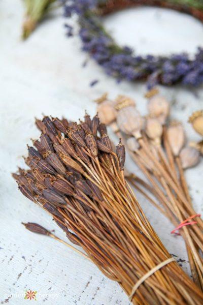 bundles of dried seed heads