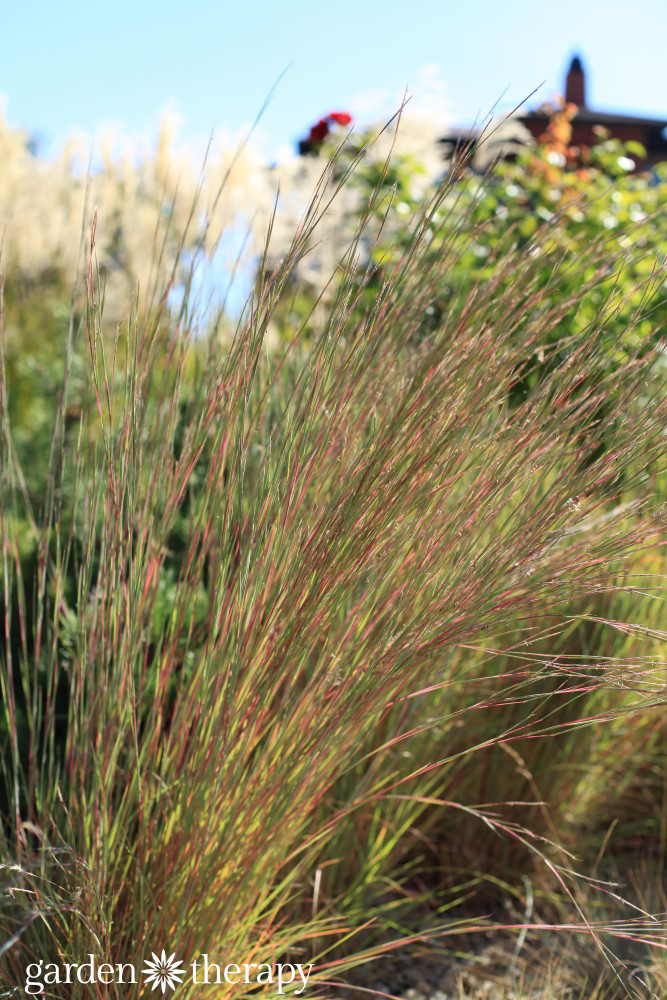 grasses provide movement and softness to the garden