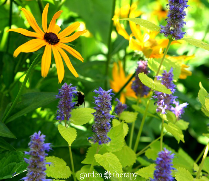 plants for budget perennial gardening