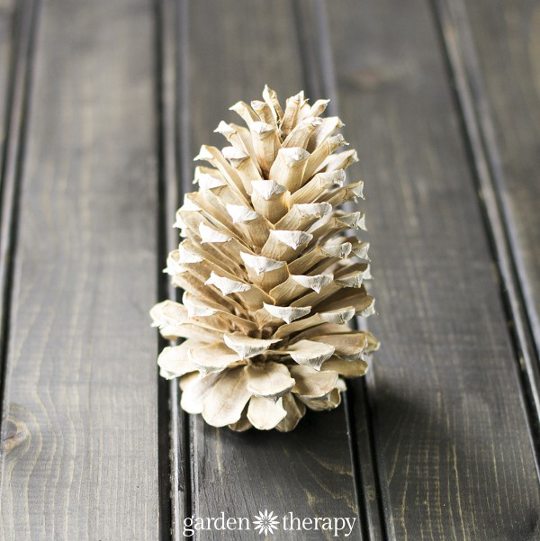 Bleached Single Pinecone