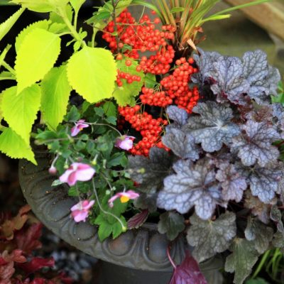 Made for the Shade: Low-Maintenance Fall Planters Bursting with Color