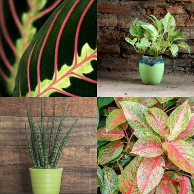 The Best Houseplants for Low Light