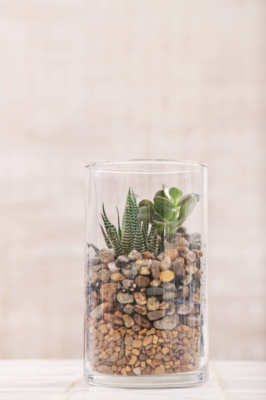 How to Make a Pebble Terrarium