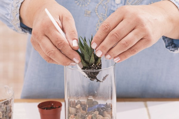 How to Make a Terrarium Step (4)